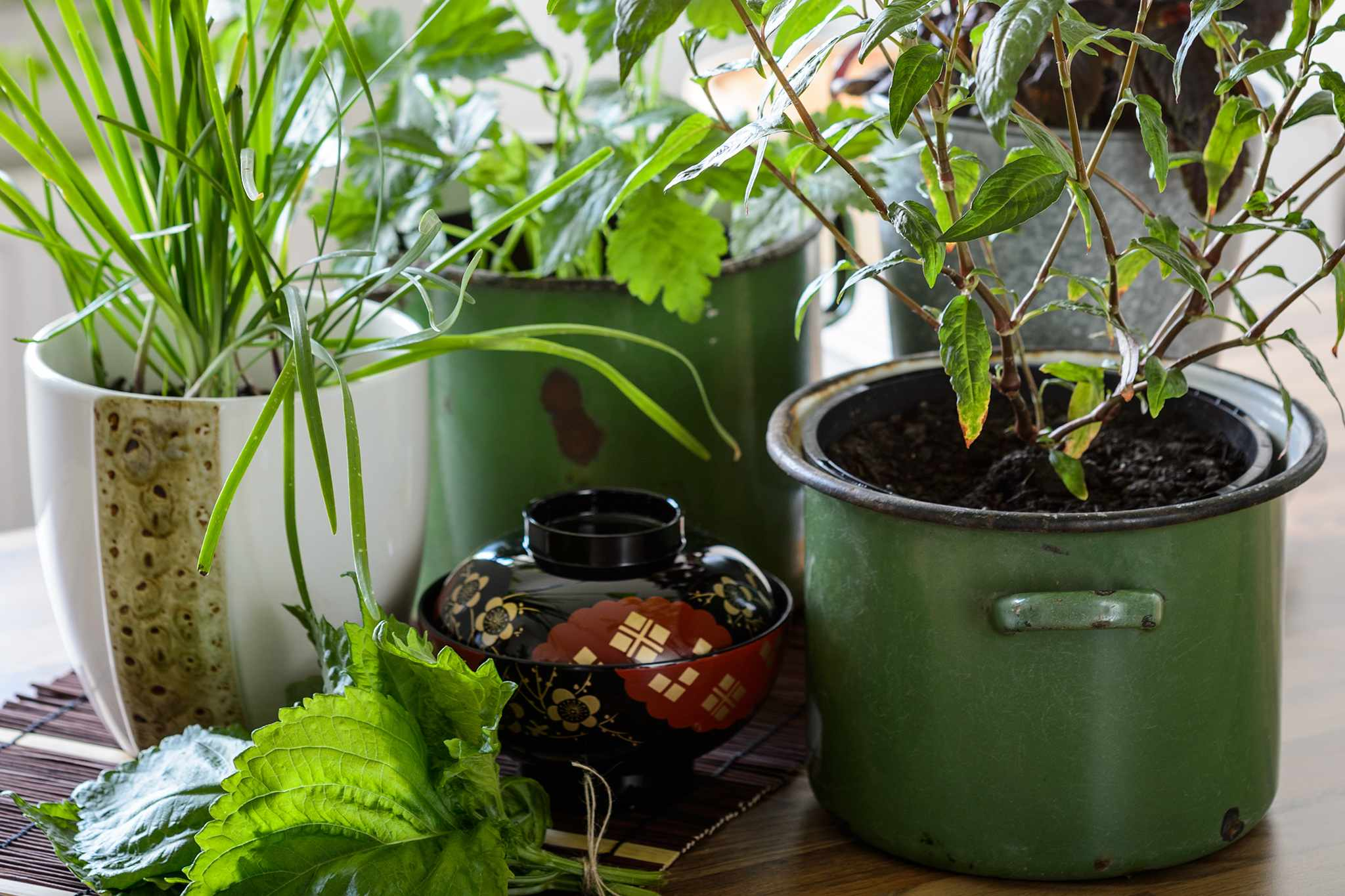 Herbs for Chinese, Japanese and southeast Asian dishes