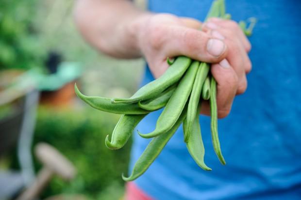 A handful of runner beans