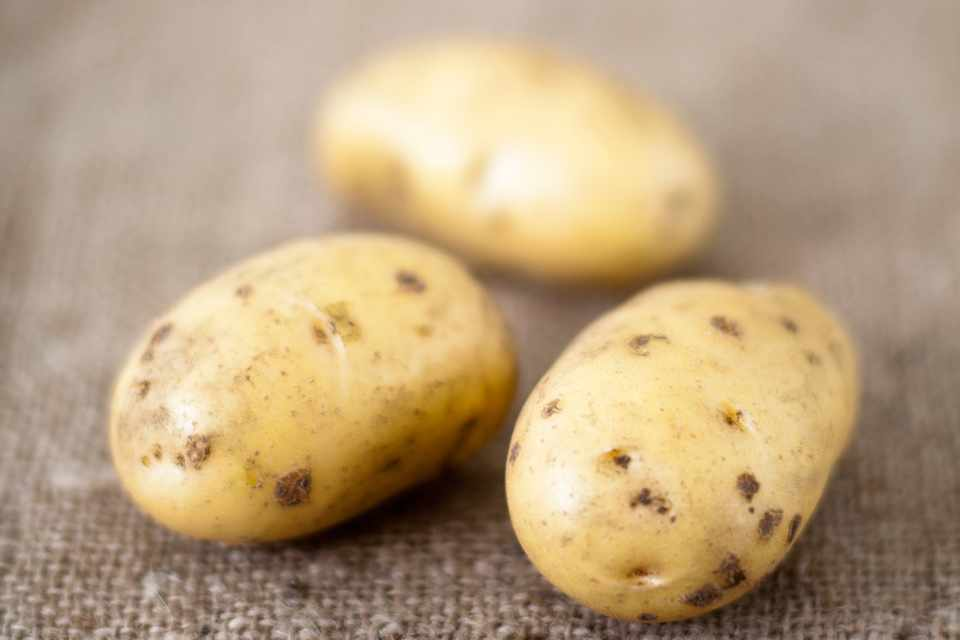 White-skinned knobly 'Anya' potatoes