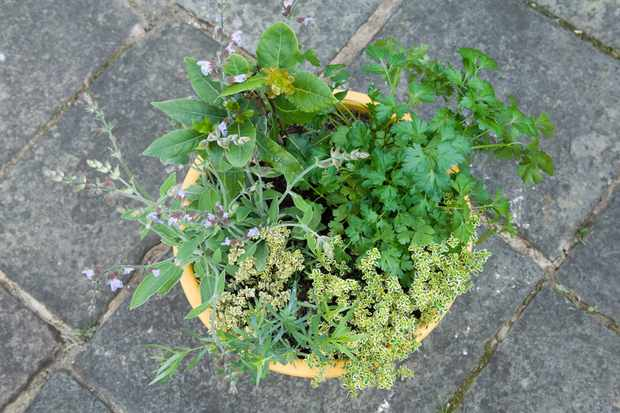 Herb pot for poultry dishes