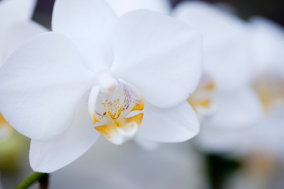 Orchid Care How To Look After Orchids Bbc Gardeners World Magazine
