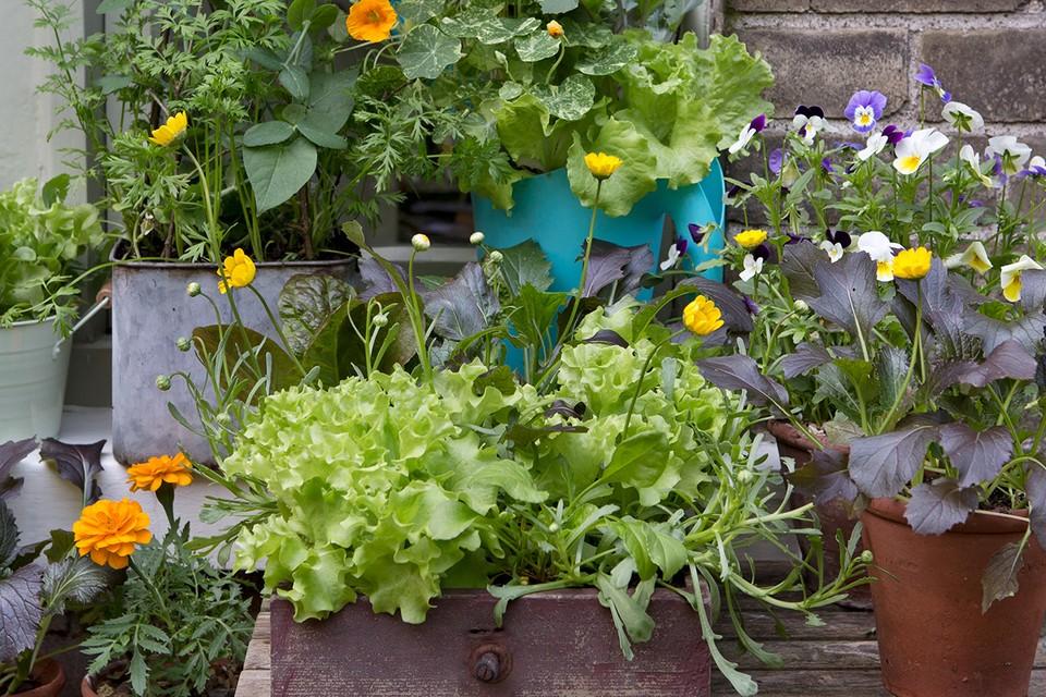 Windowsill Veg Container Ideas Bbc Gardeners World Magazine