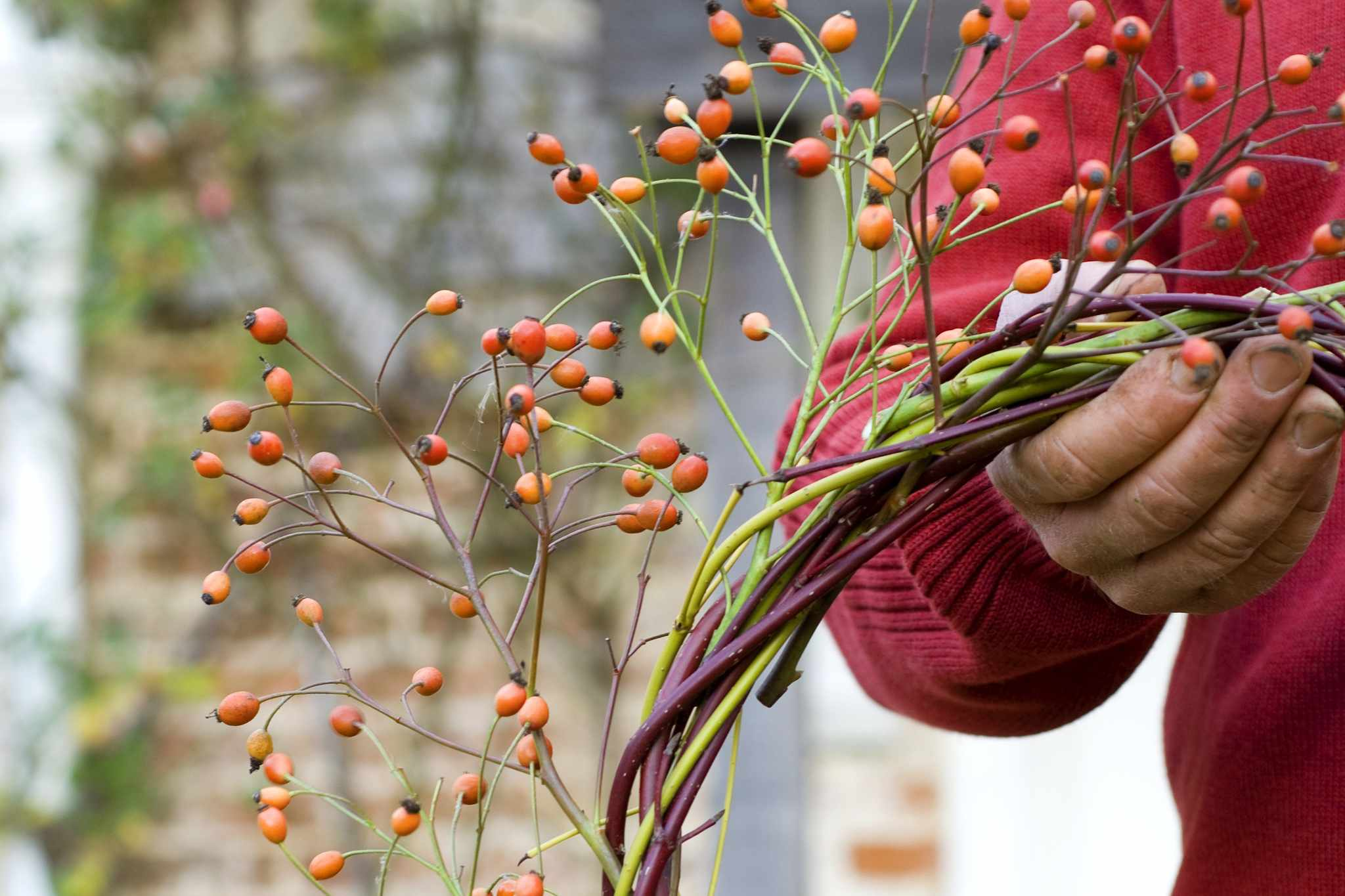 Wildlife-friendly Christmas wreath