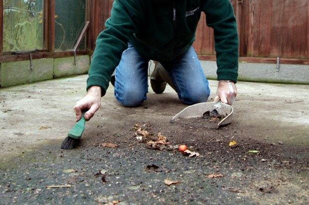 sweeping-debris-from-a-greenhouse-floor-with-a-dustpan-and-brush-2
