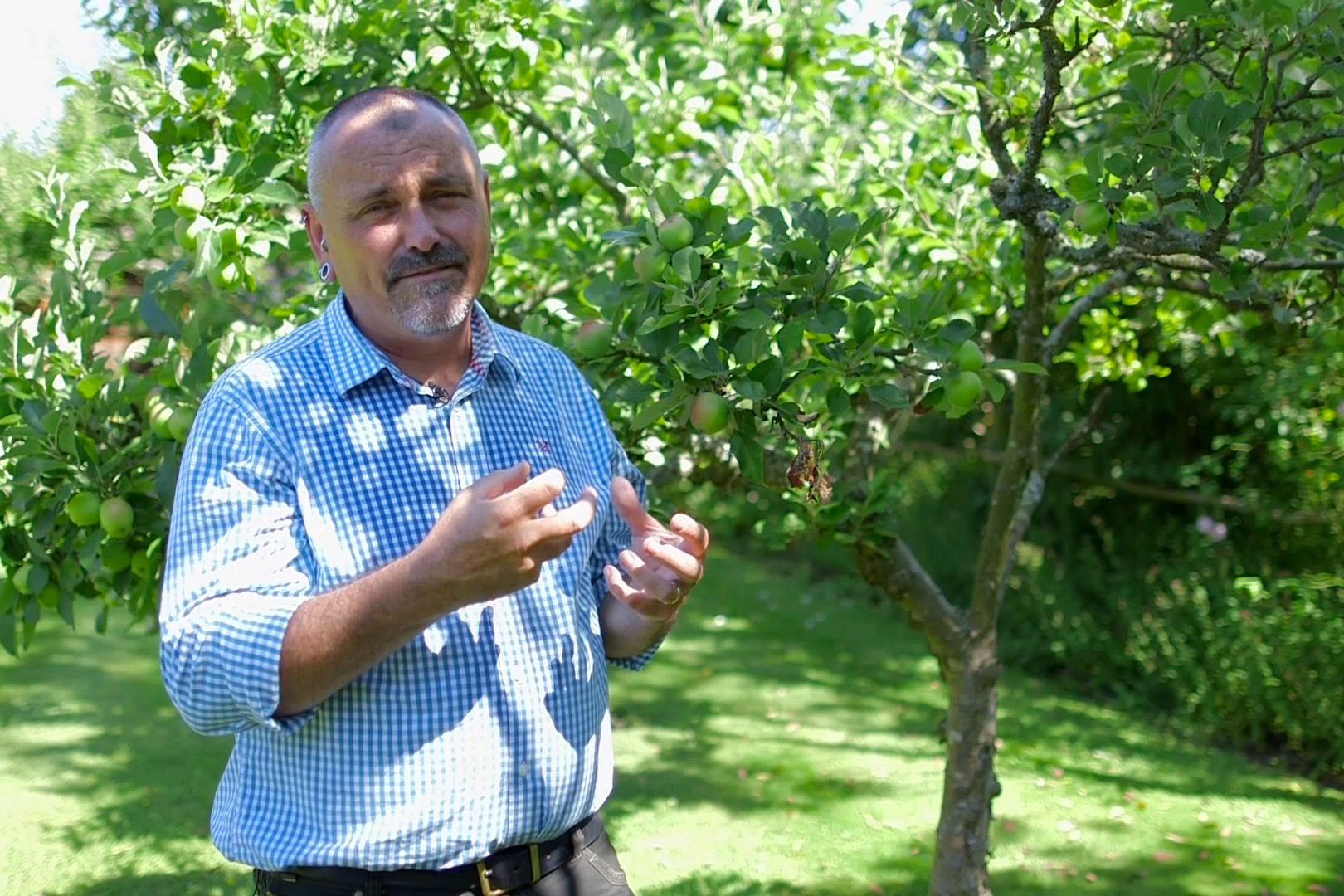 No Fuss Guide Recognising plant nutrient deficiencies