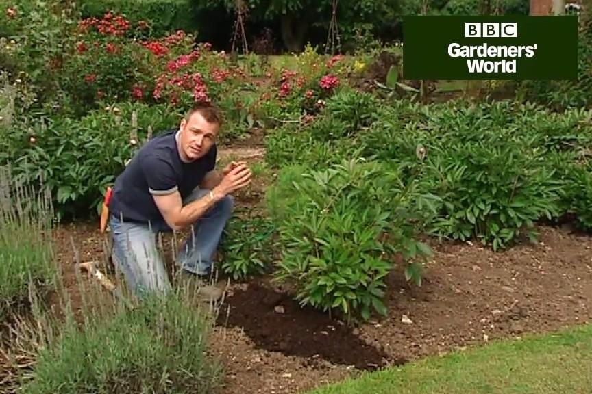How to grow peonies video