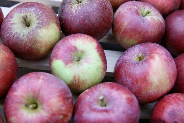 growing-apples-in-pots-2
