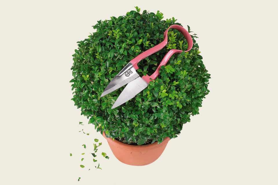 Topiary shears