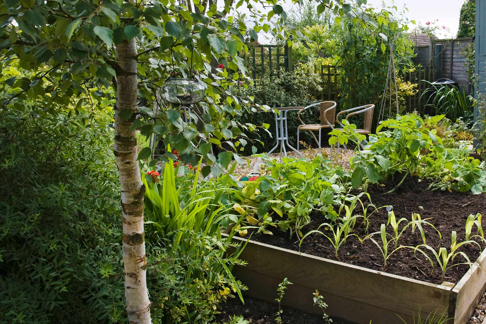 Low-maintenance veg plot