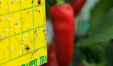 Get Rid of Fungus Gnats - BBC Gardeners' World Magazine