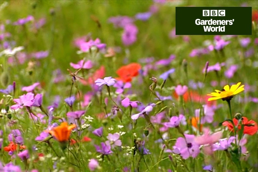 Two ways of sowing hardy annuals in a border video