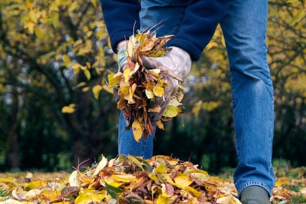 gathering-leaves-2