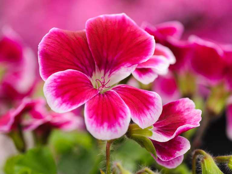 How to Care for Bedding Plants - BBC Gardeners' World Magazine