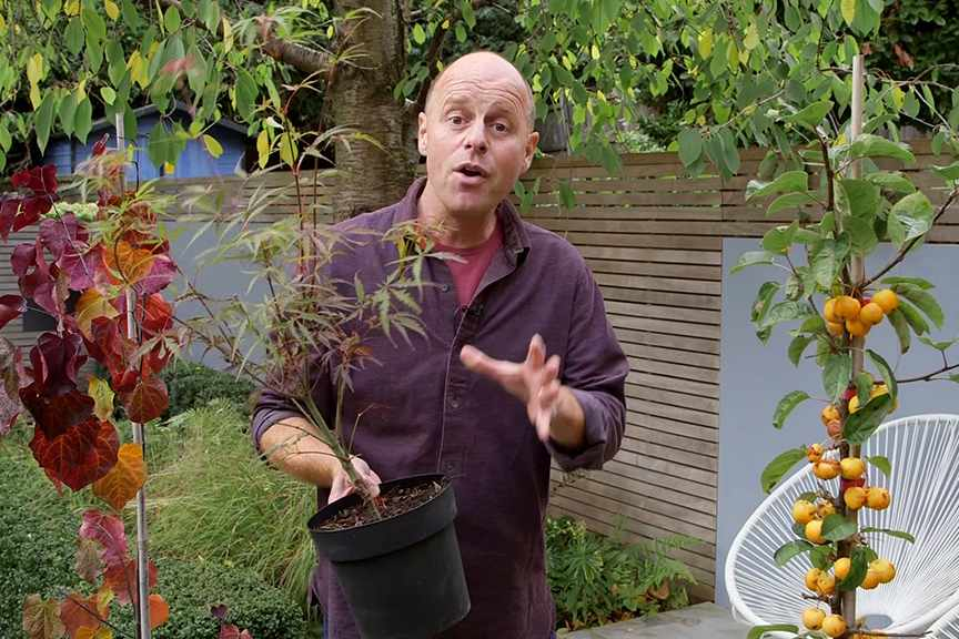 Choosing trees for small gardens
