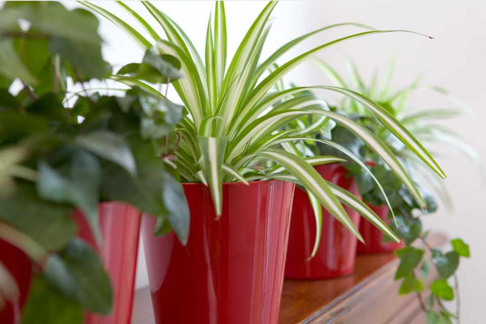 A row of a variety of houseplants