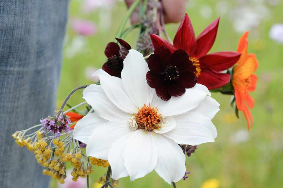 How to raise cut flowers from seed