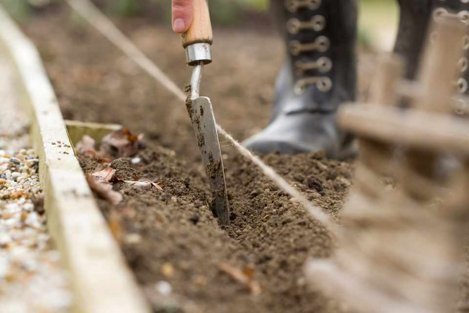 How to sow hardy annuals