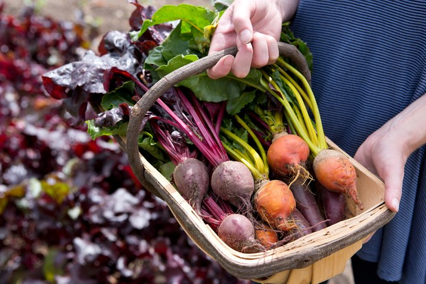 A collection of vibrant beetroot varieties