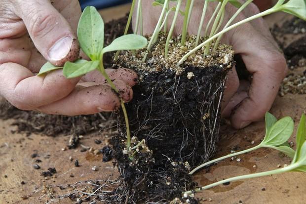 potting-on-seedlings-2