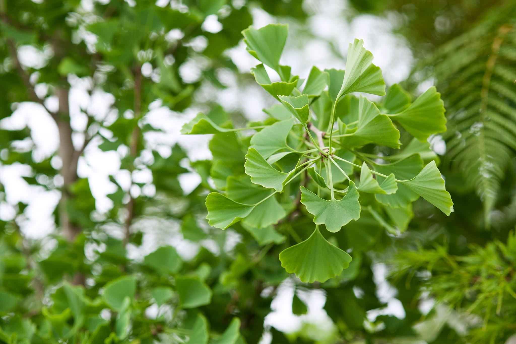 Slow-Growing Plants to Grow