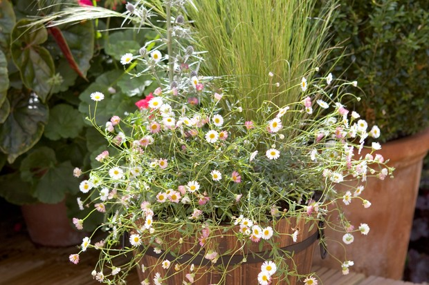 stipa-erigeron-and-eryngium-2