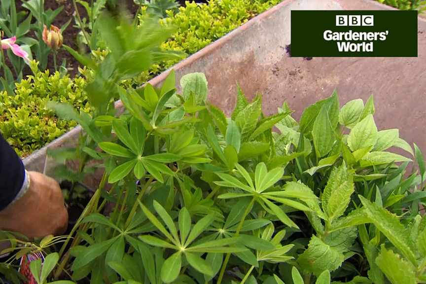 How to save money on perennials