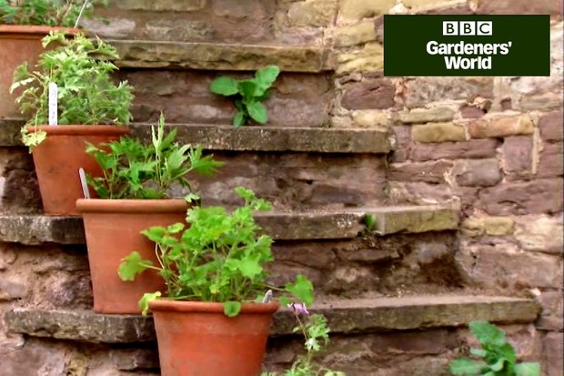 how to grow lavender in pots from seeds