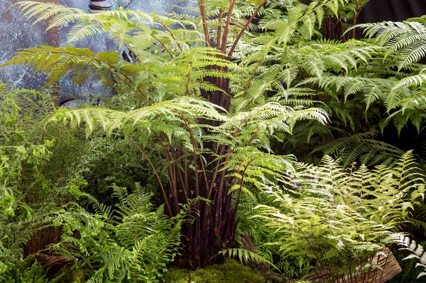 Plants For A Jungle Style Border Gardenersworld Com