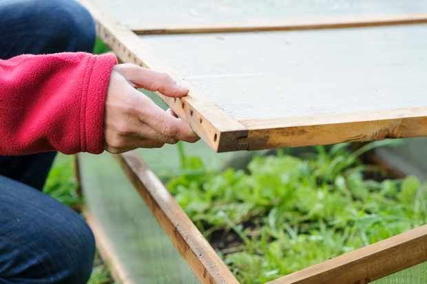 Quick ways to protect plants from frost