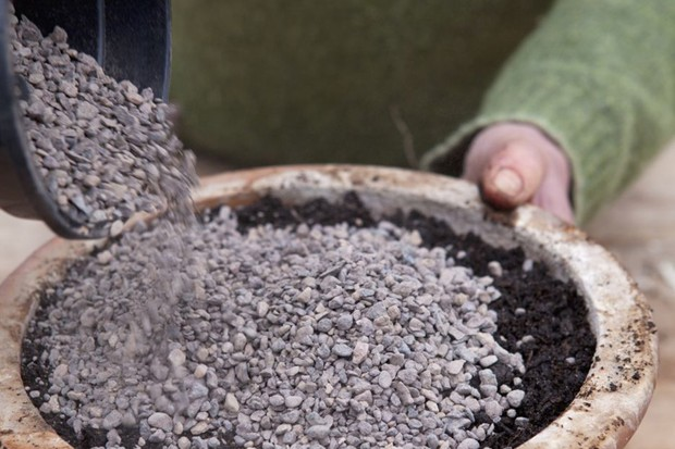 Top-dressing with horticultural grit