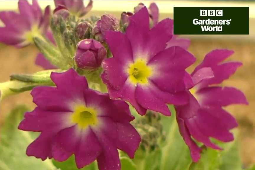 Growing alpines in a container video
