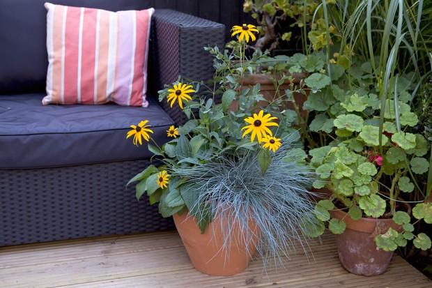 festuca-rudbeckia-and-eucalyptus-pot-2