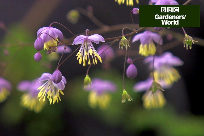 How to add late-summer colour to shady borders