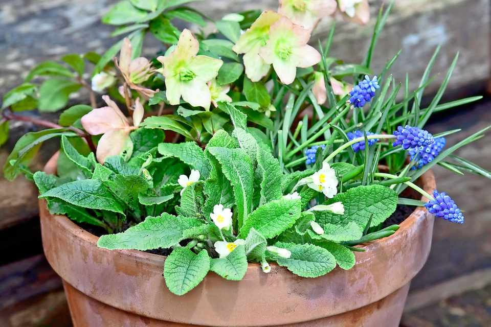 Bee-friendly spring pot display
