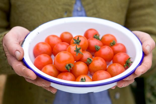 An enamel bowlful of small tomatoes