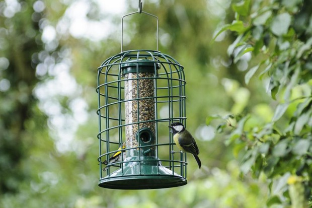 A great tit on a bird seed feeder