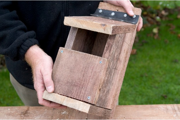 Hinged nest box - robin nest box