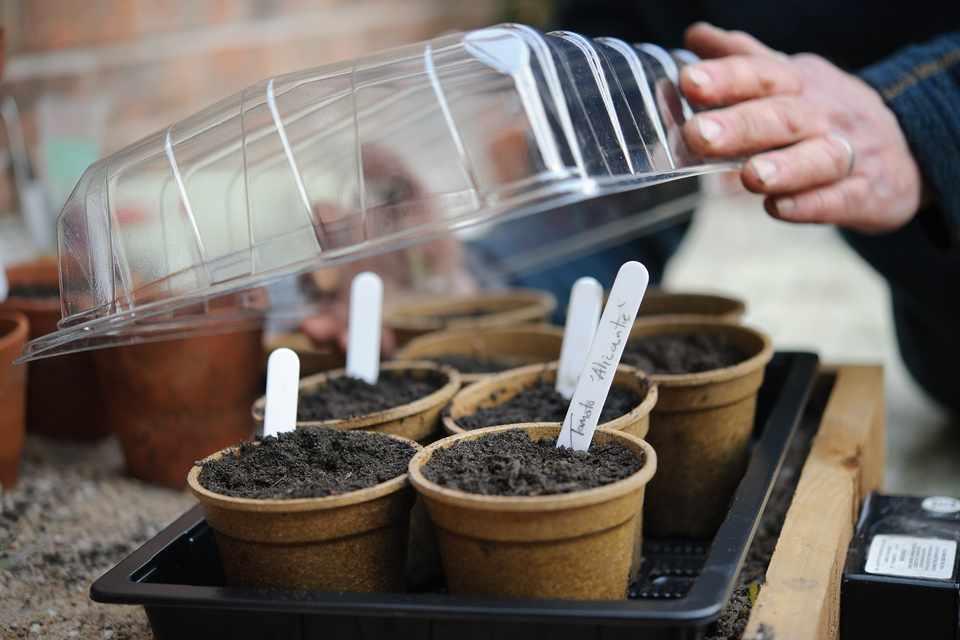 Seeds in a propagator