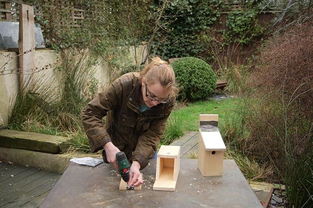 Building a bird box