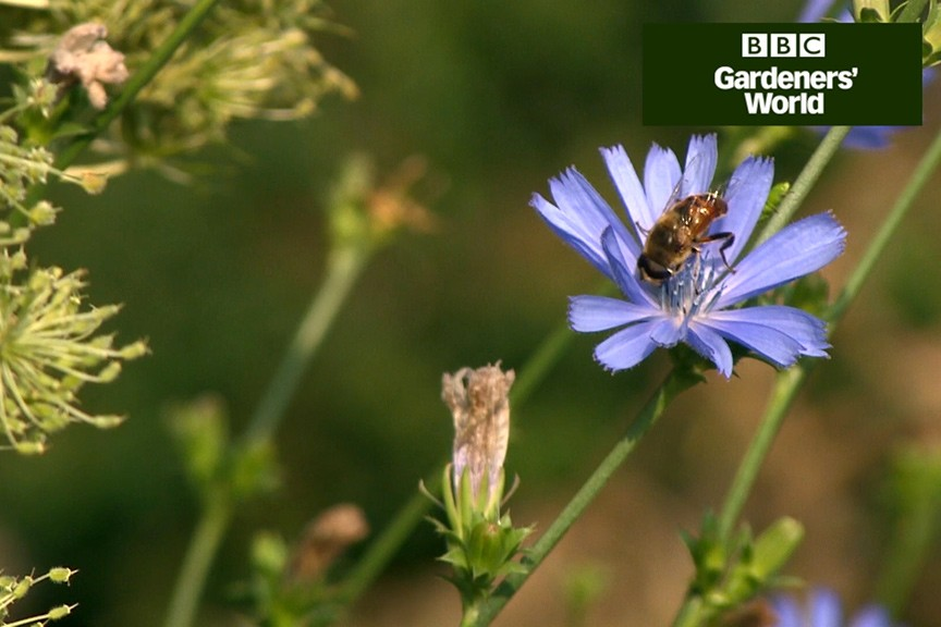 How to mow a wildflower meadow in late summer video