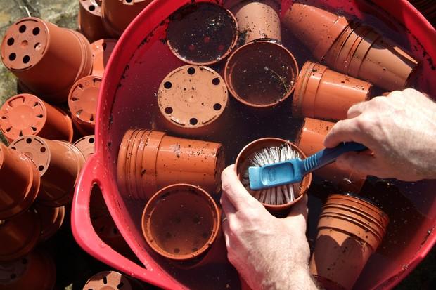Scrubbing plastic plant pots clean