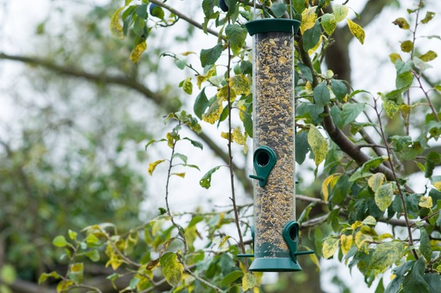 A plastic tube bird feeder full of bird seed, hanging from a tree