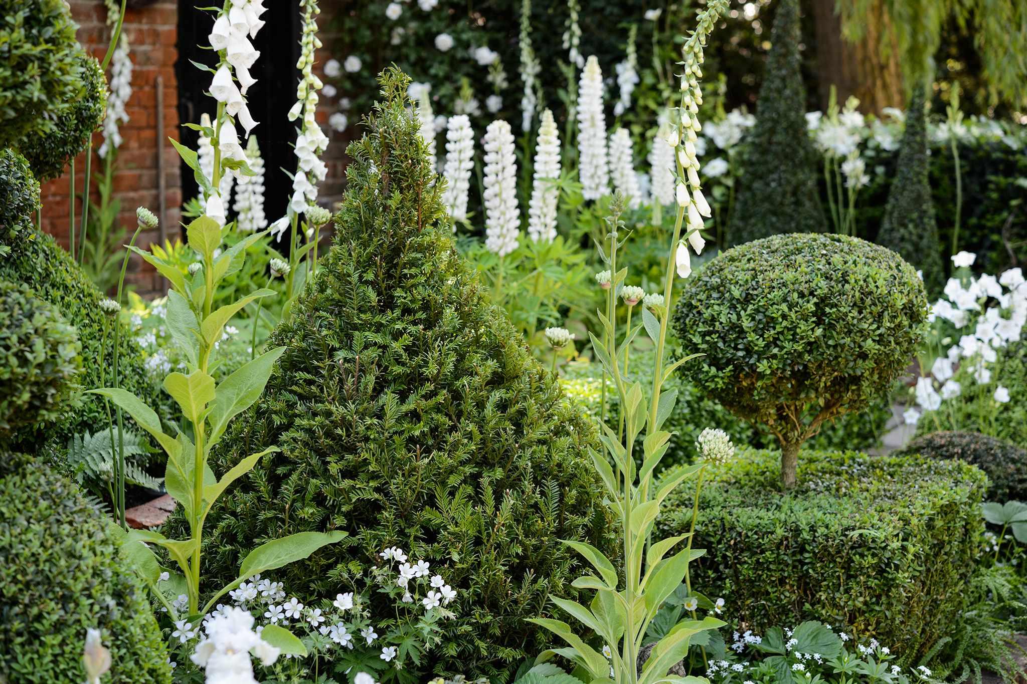 Topiary yew and box