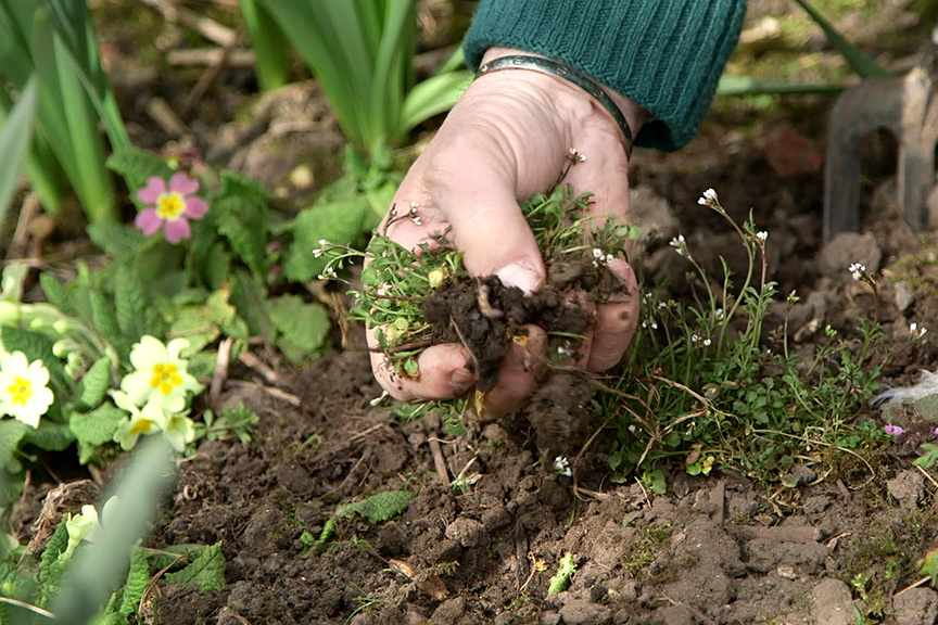 Identifying annual and perennial weeds video