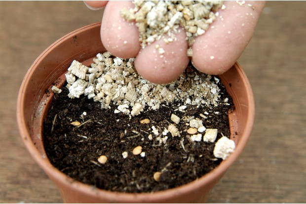 covering-aubergine-seed-with-vermiculite-2