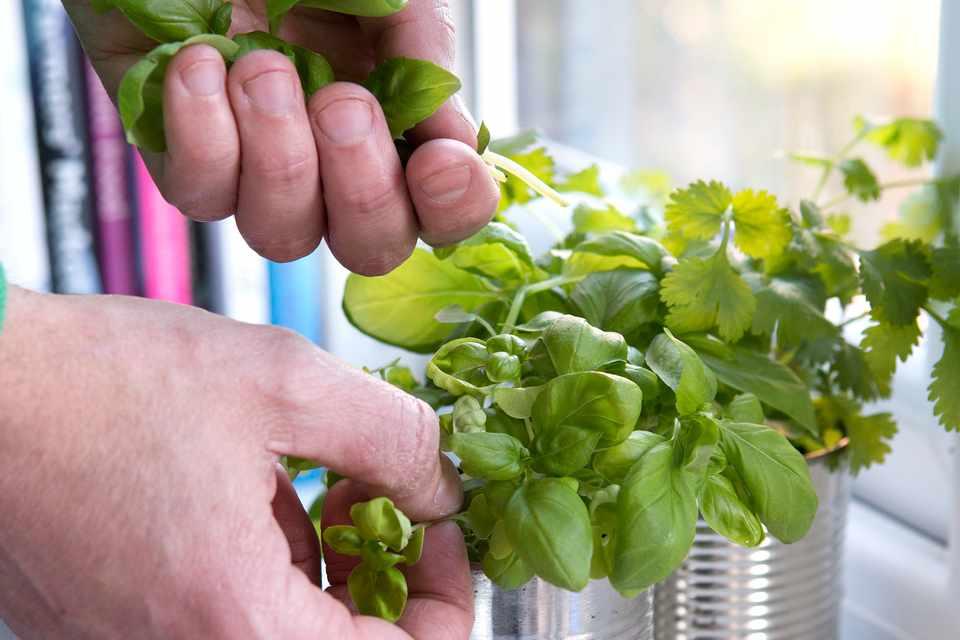 Freshly picked herbs