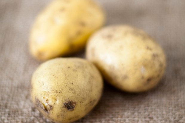 White-skinned 'Lady Christl' potatoes