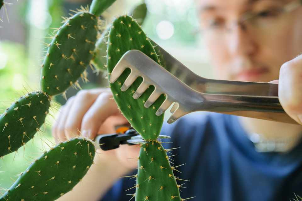 How to take cuttings from cacti and succulents