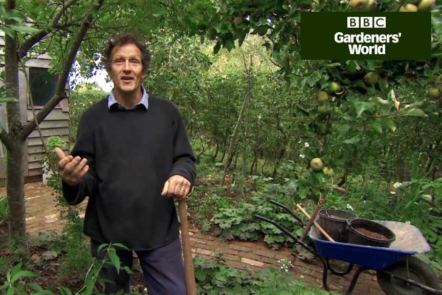 How to plant daffodils in a border video