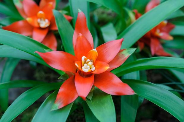 10 Exotic Houseplants To Grow Gardeners World Magazine